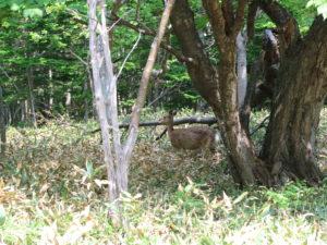 furepewaterfall-deer2