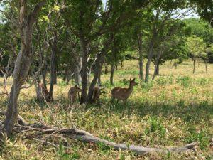 furepewaterfall-deer3